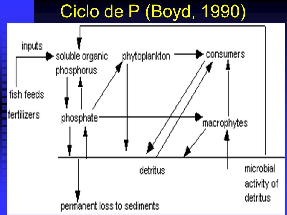 Ciclo de P (Boyd, 1990)