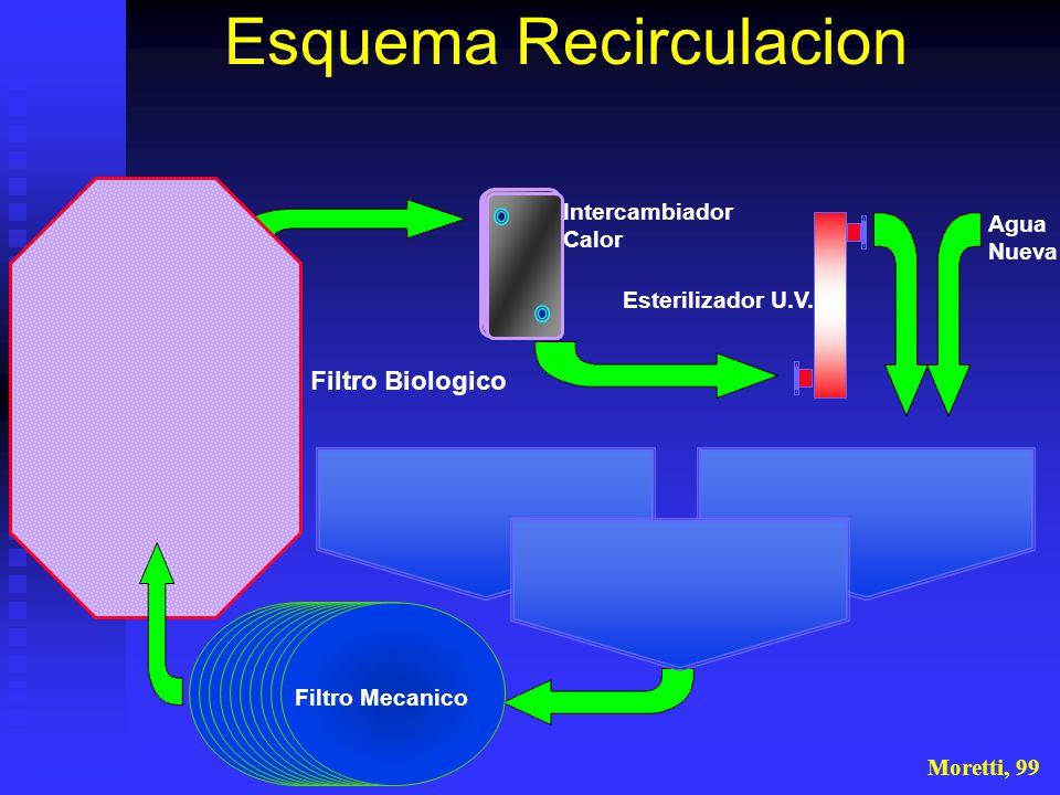 Filtro Mecanico Intercambiador Calor Esterilizador U.V. Filtro Biologico Agua Nueva Moretti, 99 Esquema Recirculacion