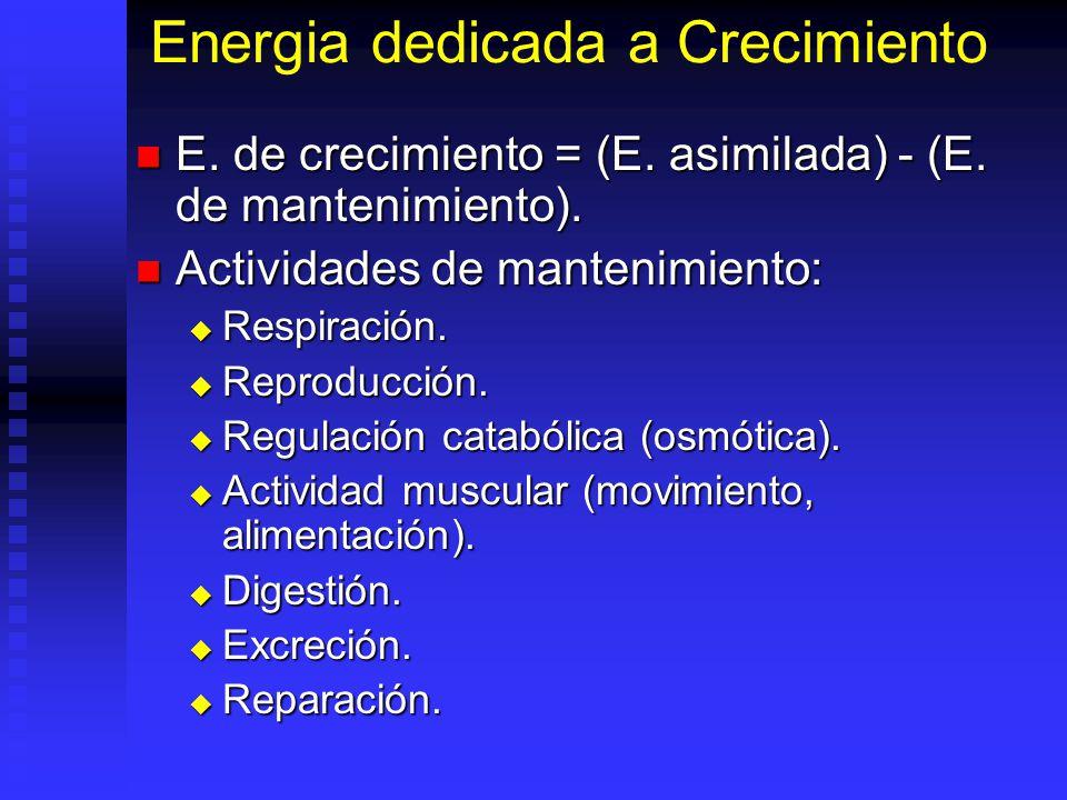 Energia dedicada a Crecimiento E. de crecimiento = (E. asimilada) - (E. de mantenimiento). E. de crecimiento = (E. asimilada) - (E. de mantenimiento).