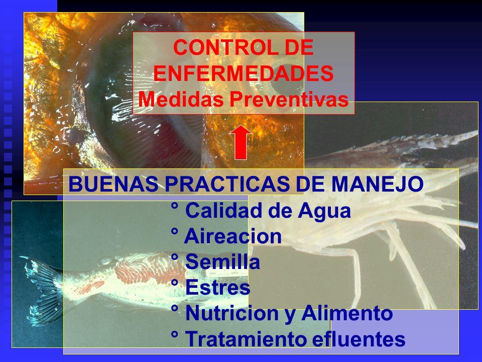 CONTROL DE ENFERMEDADES Medidas Preventivas BUENAS PRACTICAS DE MANEJO ° Calidad de Agua ° Aireacion ° Semilla ° Estres ° Nutricion y Alimento ° Trata