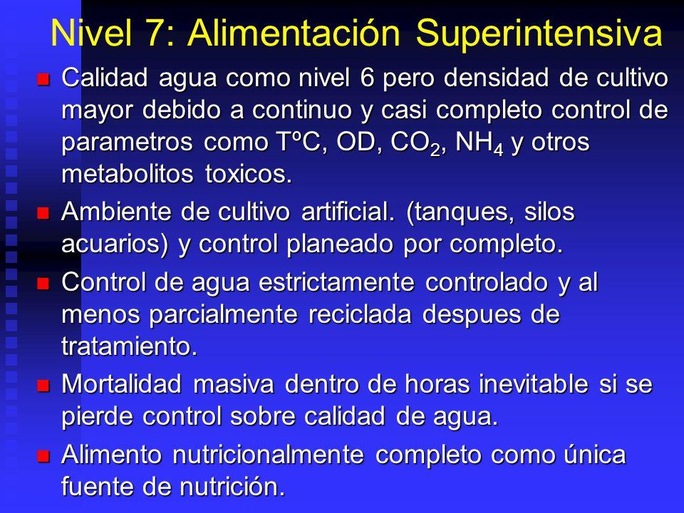 Nivel 7: Alimentación Superintensiva Calidad agua como nivel 6 pero densidad de cultivo mayor debido a continuo y casi completo control de parametros