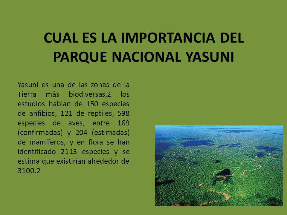 CUAL ES LA IMPORTANCIA DEL PARQUE NACIONAL YASUNI Yasuní es una de las zonas de la Tierra más biodiversas,2 los estudios hablan de 150 especies de anf