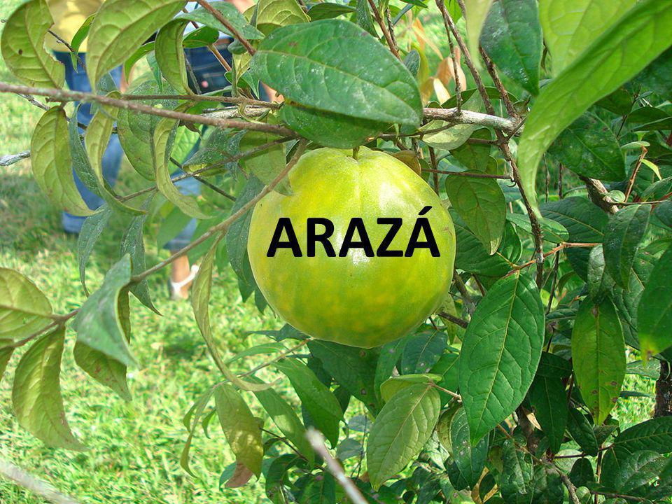 INTRODUCCIÓN Nuestro proyecto lo realizaremos con el fin de determinar la producción de mermelada de arazá en la ciudad de Guayaquil.