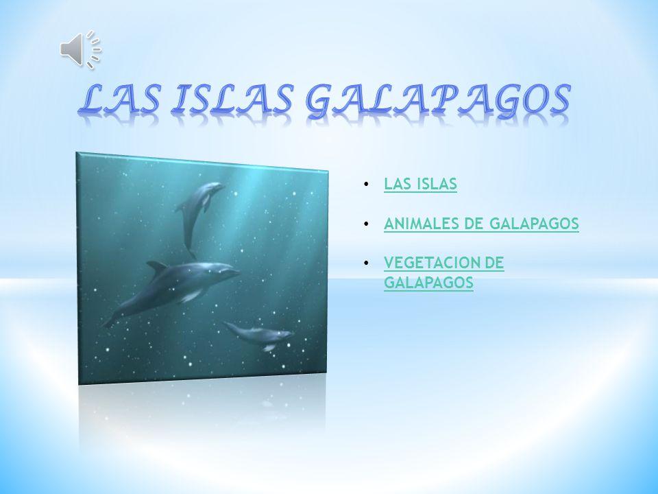 LAS ISLAS ANIMALES DE GALAPAGOS VEGETACION DE GALAPAGOS VEGETACION DE GALAPAGOS