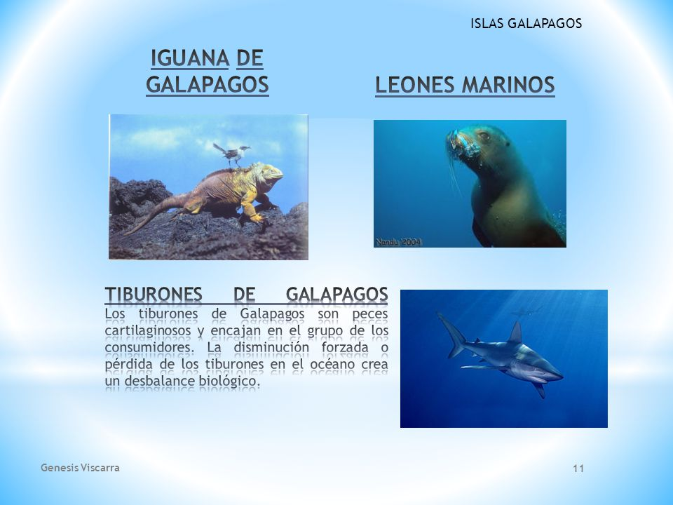 ISLAS GALAPAGOS PINZONES DE DARWIN BALLENAS DE GALAPAGOS Genesis Viscarra 10