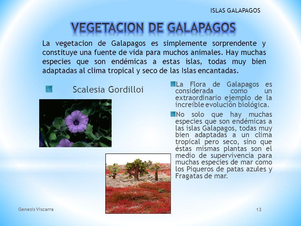 ISLAS GALAPAGOS Los Piqueros de Patas Azules son parte de los mas grandes atractivos de las famosas Islas Galapagos. Su nombre científico es (Sula neb