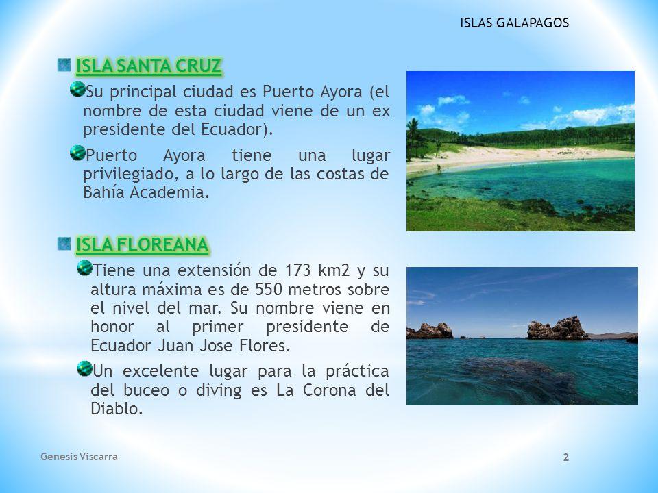 ISLAS GALAPAGOS Los Piqueros de Patas Azules son parte de los mas grandes atractivos de las famosas Islas Galapagos.