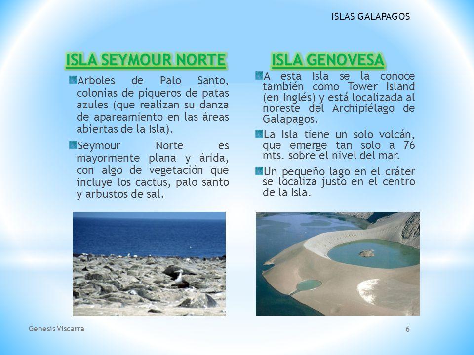 ISLAS GALAPAGOS Arboles de Palo Santo, colonias de piqueros de patas azules (que realizan su danza de apareamiento en las áreas abiertas de la Isla).