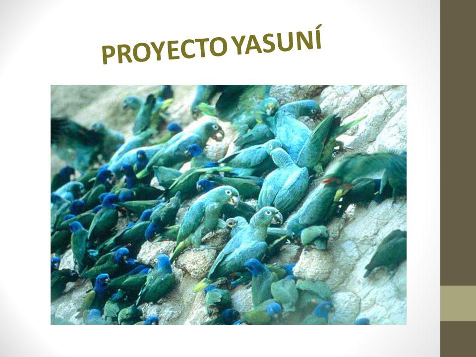 Parque Nacional Yasuní De acuerdo a estudios científicos, el Parque Yasuní ubicado en la Región amazónica ecuatoriana, en las provincias de Orellana y Pastaza, es la región de mayor diversidad biológica del mundo.