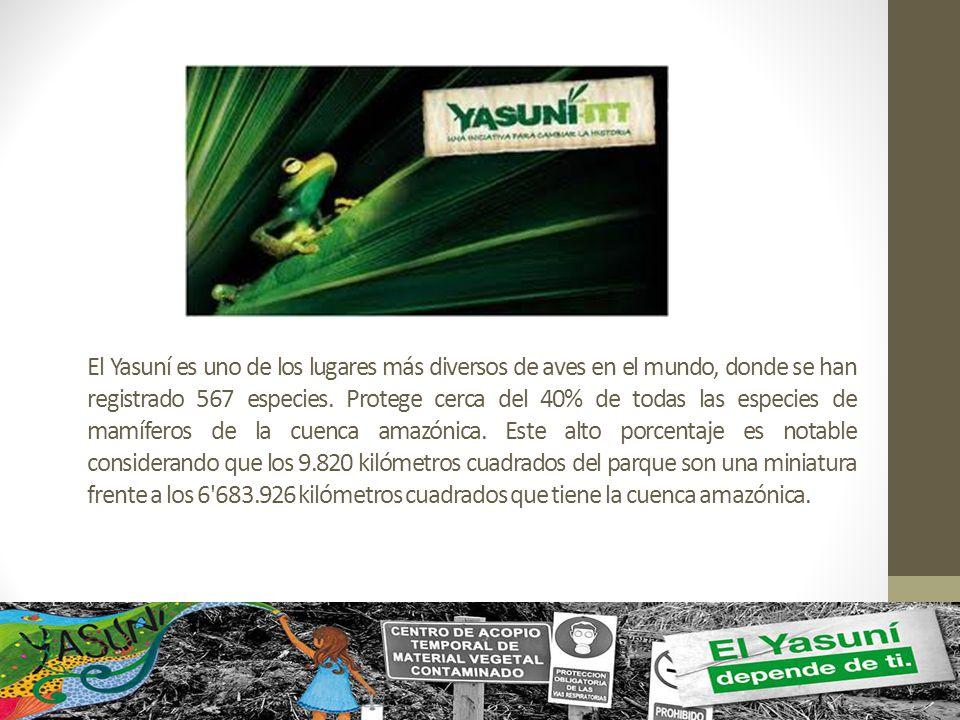 El Yasuní es uno de los lugares más diversos de aves en el mundo, donde se han registrado 567 especies. Protege cerca del 40% de todas las especies de