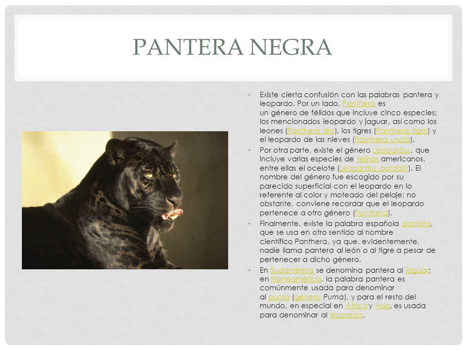 PANTERA NEGRA Existe cierta confusión con las palabras pantera y leopardo.