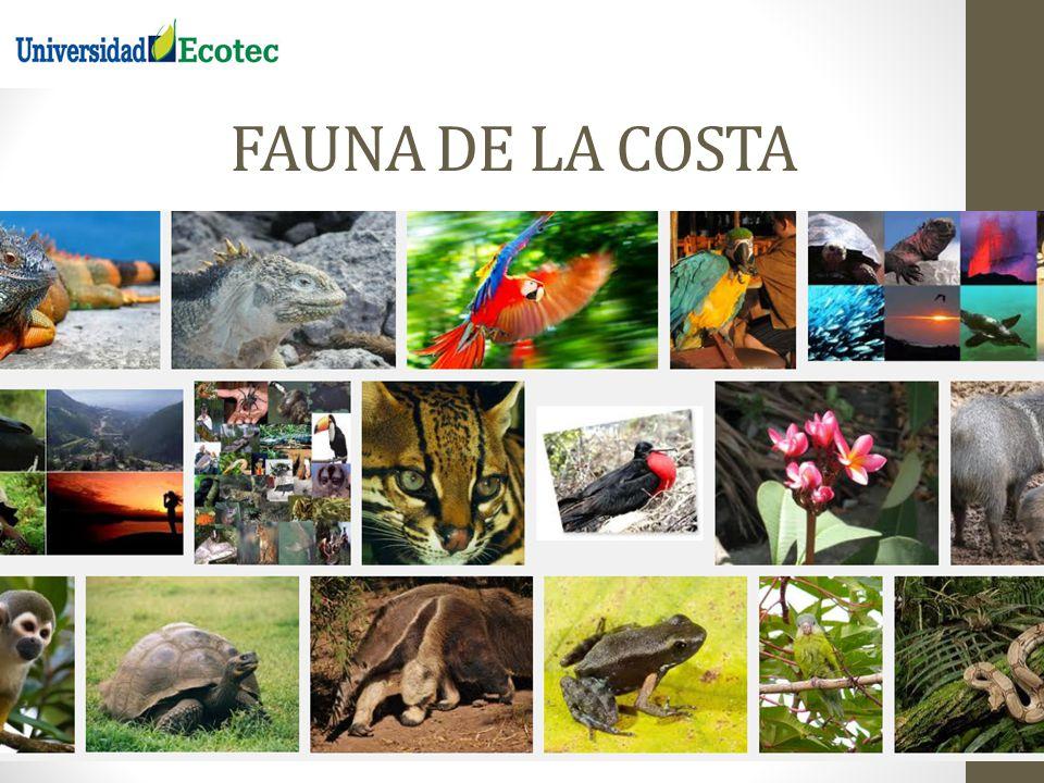 FAUNA DE LA COSTA REGION LITORAL O COSTA DEL ECUADOR 13