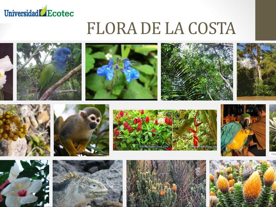 FLORA DE LA COSTA REGION LITORAL O COSTA DEL ECUADOR 14