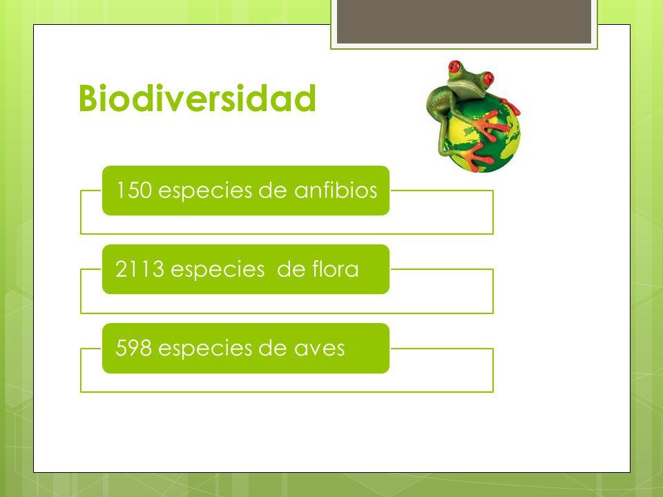 Biodiversidad 150 especies de anfibios2113 especies de flora598 especies de aves