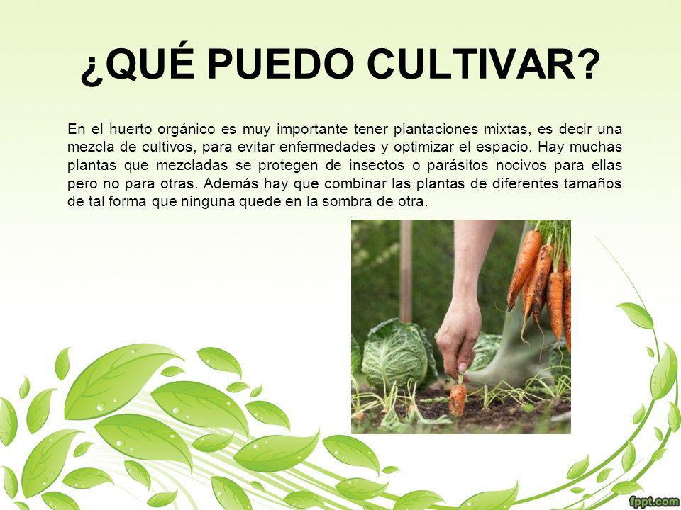 En el huerto orgánico es muy importante tener plantaciones mixtas, es decir una mezcla de cultivos, para evitar enfermedades y optimizar el espacio. H