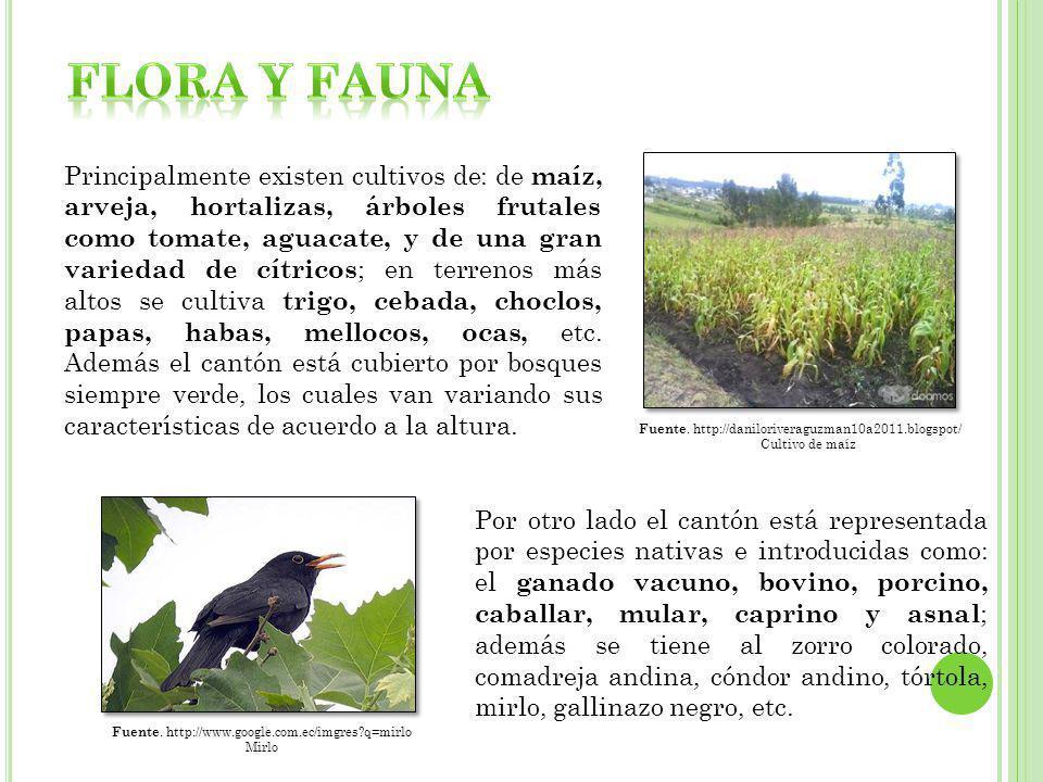 Principalmente existen cultivos de: de maíz, arveja, hortalizas, árboles frutales como tomate, aguacate, y de una gran variedad de cítricos ; en terre