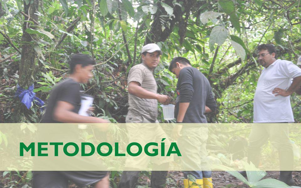 METODOLOGÍA El proceso metodológico empleado para el desarrollo del proyecto comprendió cinco etapas: a)Recopilación de información secundaria b)Identificación del área de estudio y puntos de muestreo c)Levantamiento de línea de base hidrológica.