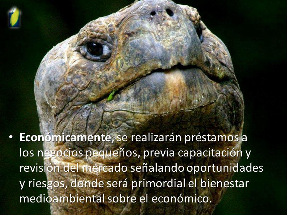Económicamente, se realizarán préstamos a los negocios pequeños, previa capacitación y revisión del mercado señalando oportunidades y riesgos, donde será primordial el bienestar medioambiental sobre el económico.