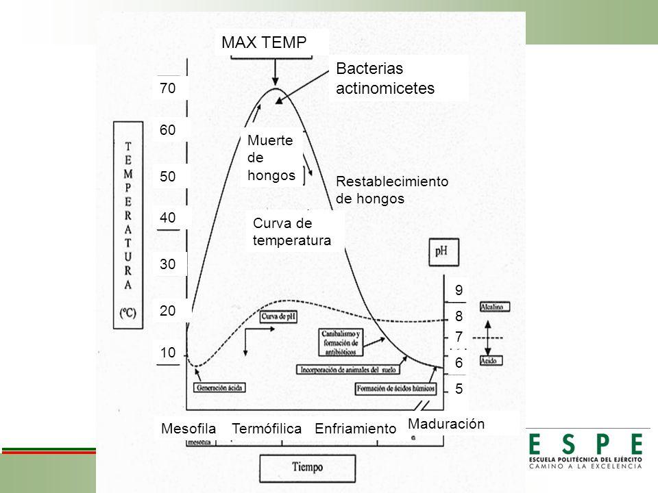 MAX TEMP Bacterias actinomicetes 70 50 60 40 30 20 10 Muerte de hongos Restablecimiento de hongos Curva de temperatura MesofilaTermófilicaEnfriamiento