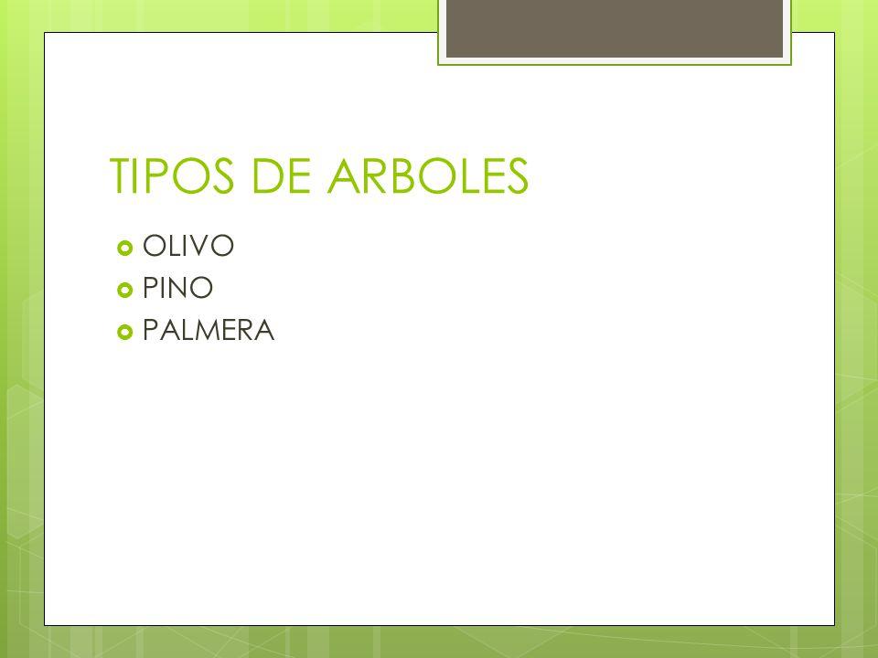 TIPOS DE ARBOLES OLIVO PINO PALMERA