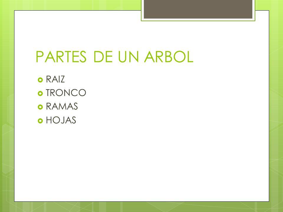 PARTES DE UN ARBOL RAIZ TRONCO RAMAS HOJAS