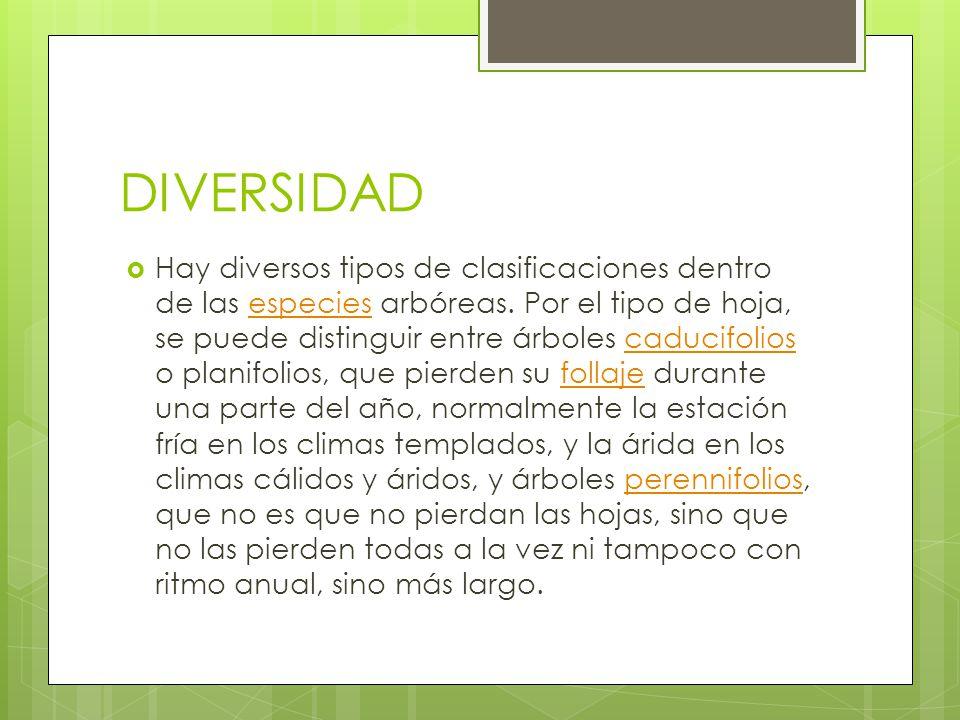DIVERSIDAD Hay diversos tipos de clasificaciones dentro de las especies arbóreas. Por el tipo de hoja, se puede distinguir entre árboles caducifolios