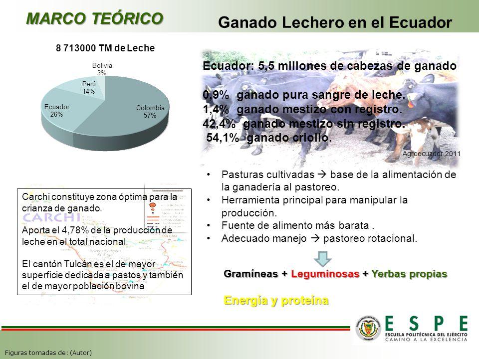 8 713000 TM de Leche Ecuador: 5,5 millones de cabezas de ganado 0,9% ganado pura sangre de leche. 1,4% ganado mestizo con registro. 42,4% ganado mesti