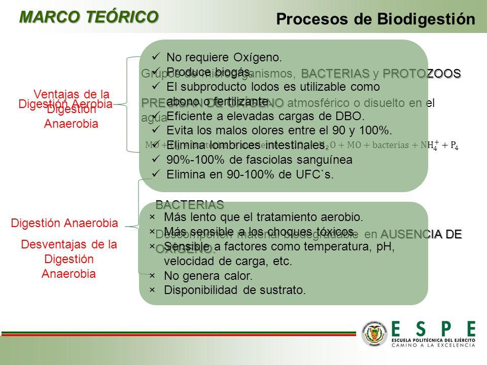 MARCO TEÓRICO Procesos de Biodigestión Digestión Aerobia Digestión Anaerobia BACTERIAS AUSENCIA DE OXÍGENO. Descomponen material biodegradable en AUSE