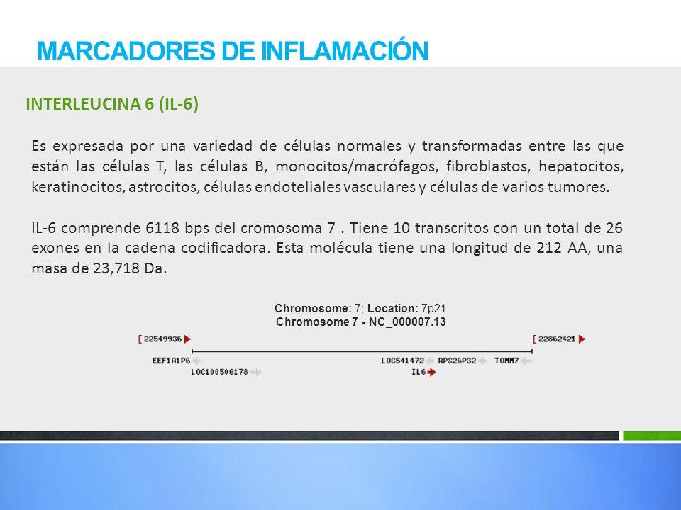 INTERLEUCINA 6 (IL-6) MARCADORES DE INFLAMACIÓN Es expresada por una variedad de células normales y transformadas entre las que están las células T, l