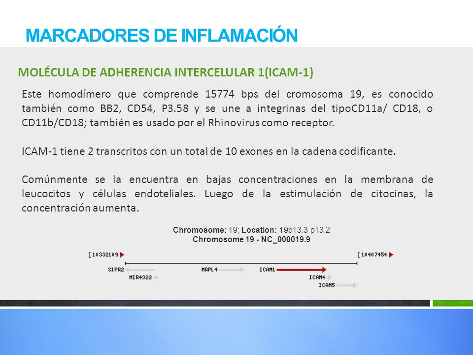 MOLÉCULA DE ADHERENCIA INTERCELULAR 1(ICAM-1) MARCADORES DE INFLAMACIÓN Este homodímero que comprende 15774 bps del cromosoma 19, es conocido también
