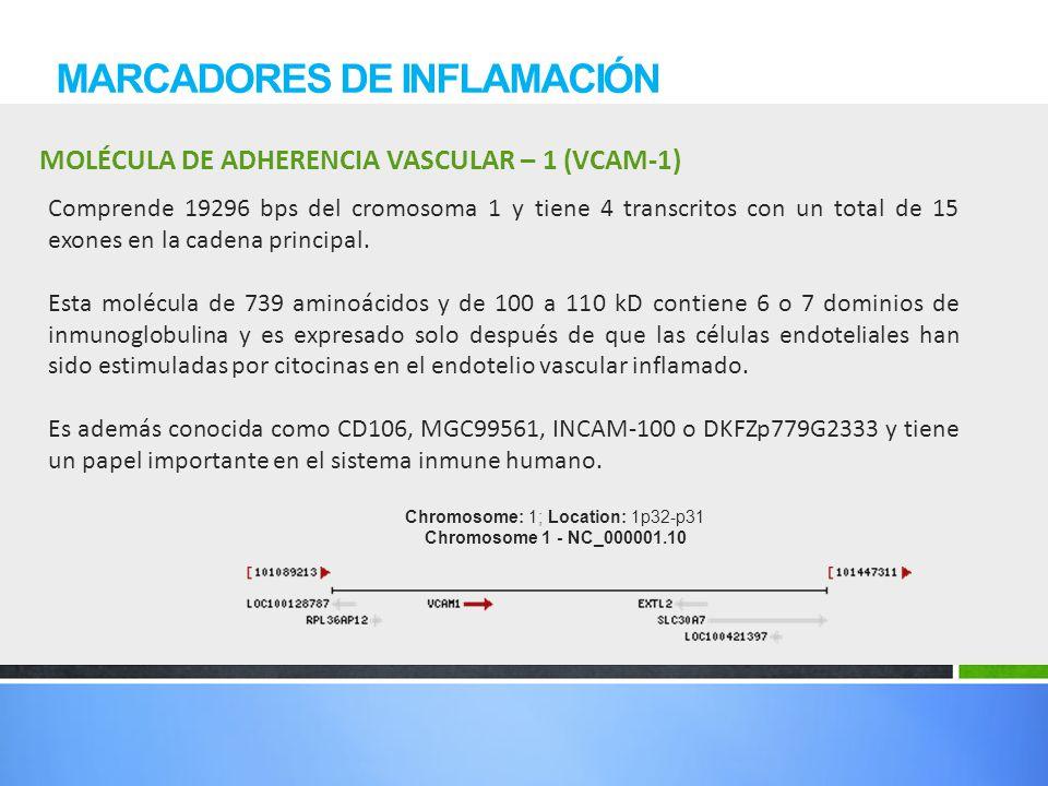 MOLÉCULA DE ADHERENCIA VASCULAR – 1 (VCAM-1) MARCADORES DE INFLAMACIÓN Comprende 19296 bps del cromosoma 1 y tiene 4 transcritos con un total de 15 ex
