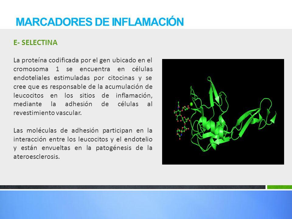 E- SELECTINA MARCADORES DE INFLAMACIÓN La proteína codificada por el gen ubicado en el cromosoma 1 se encuentra en células endoteliales estimuladas po
