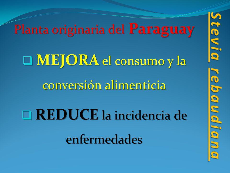 Planta originaria del Paraguay M MEJORA el consumo y la conversión alimenticia R REDUCE la incidencia de enfermedades