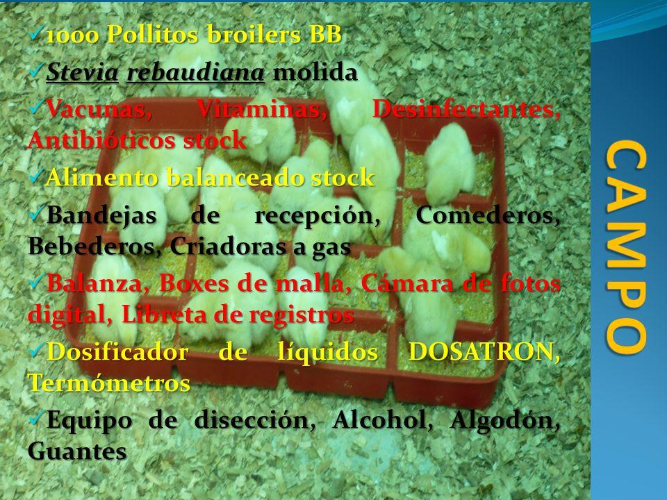 1000 Pollitos broilers BB 1000 Pollitos broilers BB Stevia rebaudiana molida Stevia rebaudiana molida Vacunas, Vitaminas, Desinfectantes, Antibióticos
