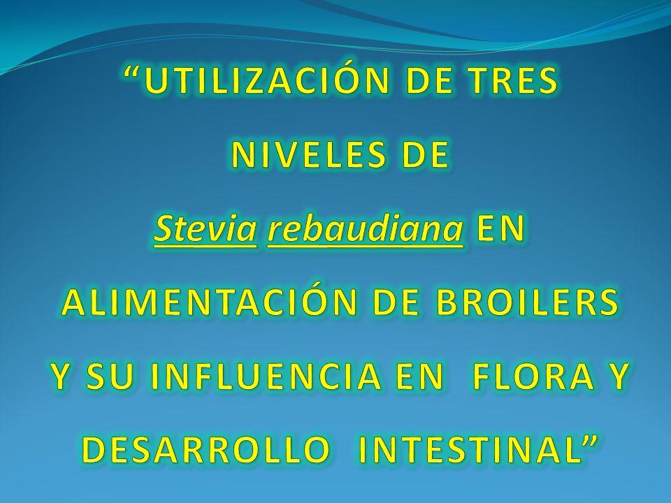 TRATAMIENTOS BENEFICIO BRUTO COSTO VARIABLE BENEFICIO NETO T1 0,5% Stevia 1548,37917,00631,36 T2 1,0% Stevia 1588,46922,60665,86 T3 1,5% Stevia 1575,10927,97647,13 T4 Testigo 1535,00911,79623,21