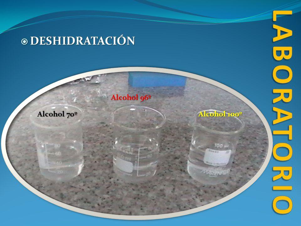 DESHIDRATACIÓN DESHIDRATACIÓN Alcohol 70º Alcohol 96º Alcohol 100º