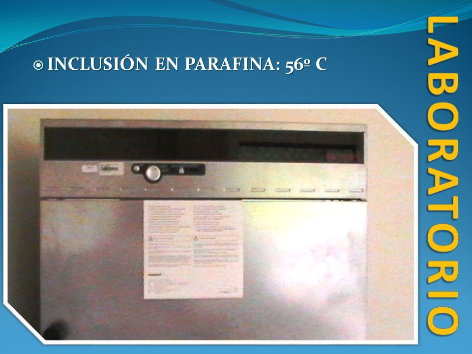 INCLUSIÓN EN PARAFINA: 56º C INCLUSIÓN EN PARAFINA: 56º C