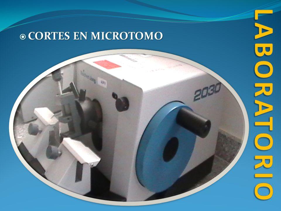 CORTES EN MICROTOMO CORTES EN MICROTOMO