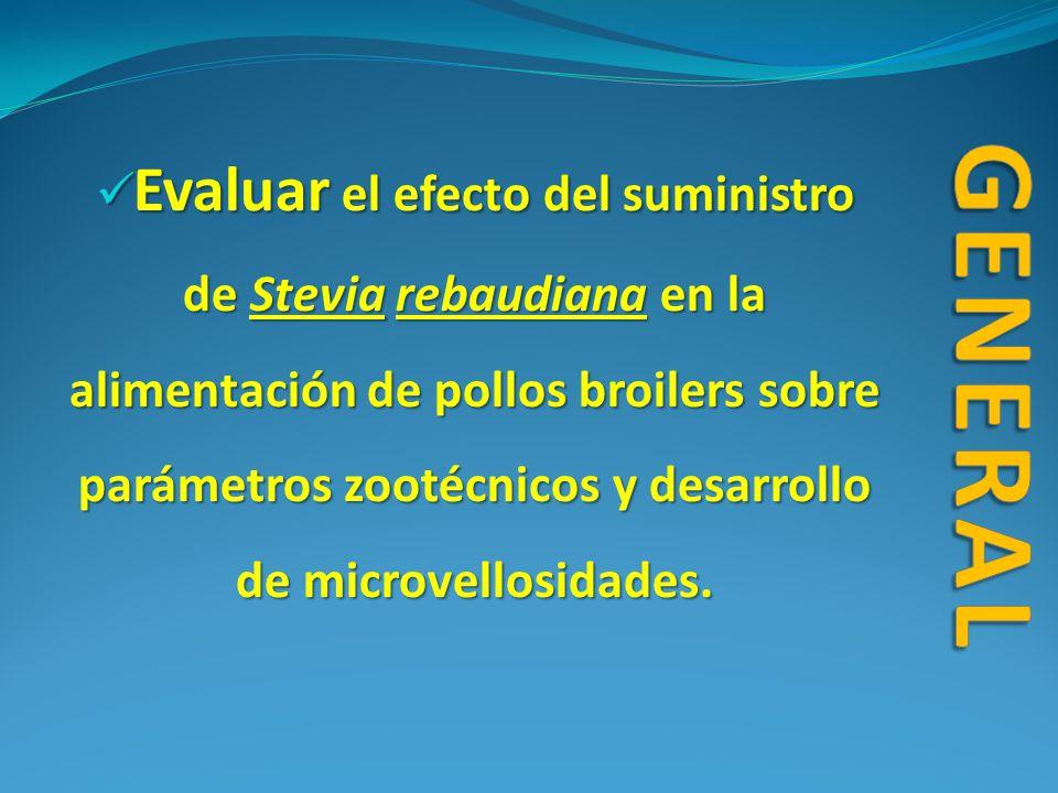Evaluar niveles de inclusión de Stevia rebaudiana (0.5 %, 1.0 %, 1.5 %) sobre el crecimiento y desarrollo de microvellosidades.