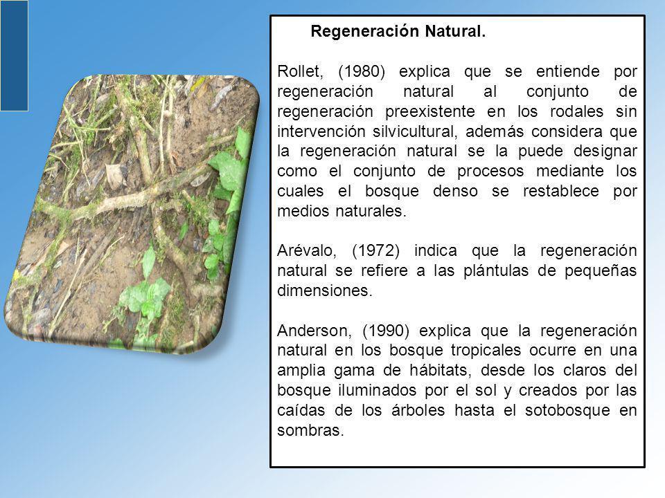 Regeneración Natural. Rollet, (1980) explica que se entiende por regeneración natural al conjunto de regeneración preexistente en los rodales sin inte