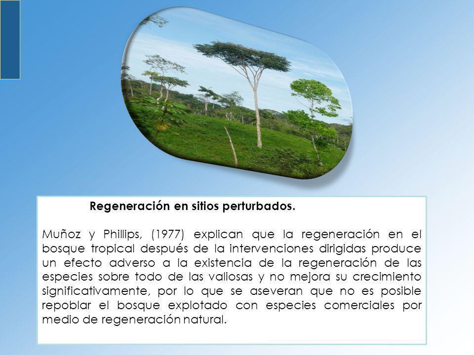 Regeneración en sitios perturbados. Muñoz y Phillips, (1977) explican que la regeneración en el bosque tropical después de la intervenciones dirigidas