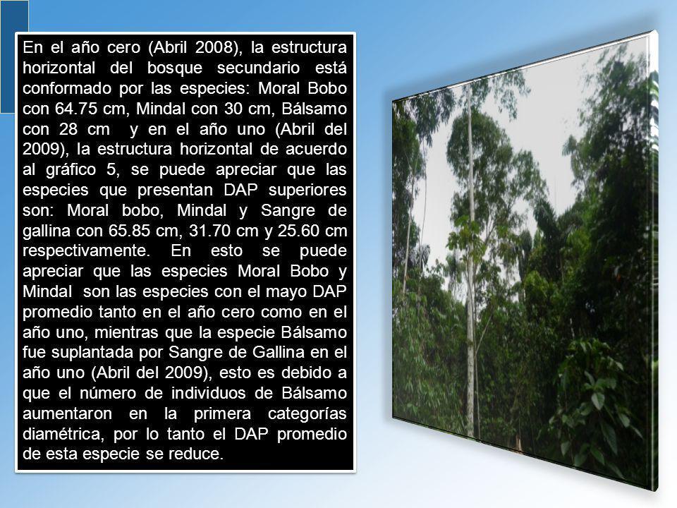 En el año cero (Abril 2008), la estructura horizontal del bosque secundario está conformado por las especies: Moral Bobo con 64.75 cm, Mindal con 30 c