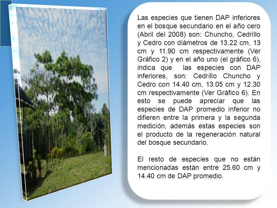 Las especies que tienen DAP inferiores en el bosque secundario en el año cero (Abril del 2008) son: Chuncho, Cedrillo y Cedro con diámetros de 13.22 c