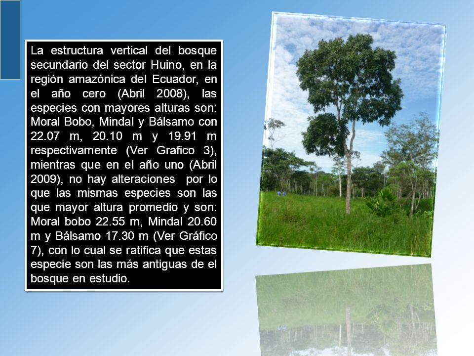 La estructura vertical del bosque secundario del sector Huino, en la región amazónica del Ecuador, en el año cero (Abril 2008), las especies con mayor