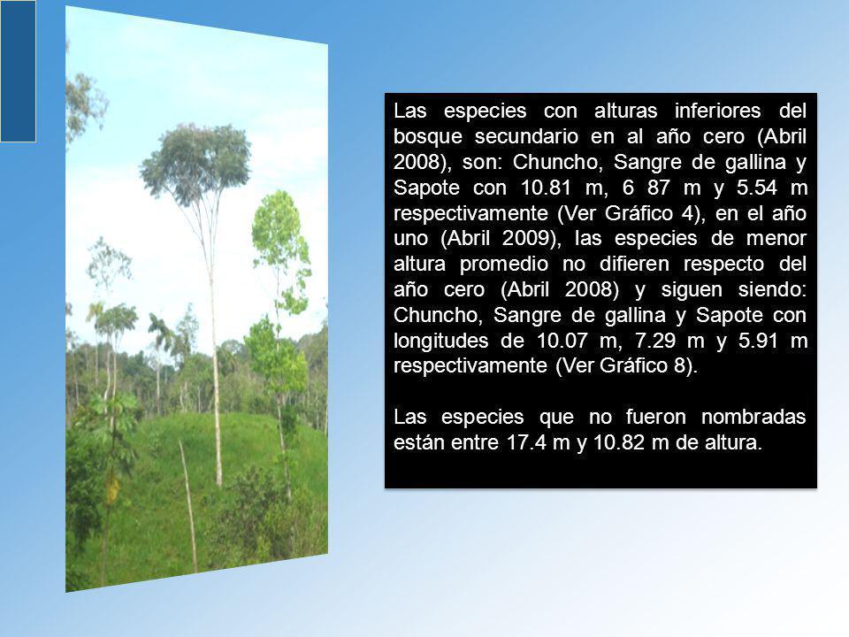 Las especies con alturas inferiores del bosque secundario en al año cero (Abril 2008), son: Chuncho, Sangre de gallina y Sapote con 10.81 m, 6 87 m y