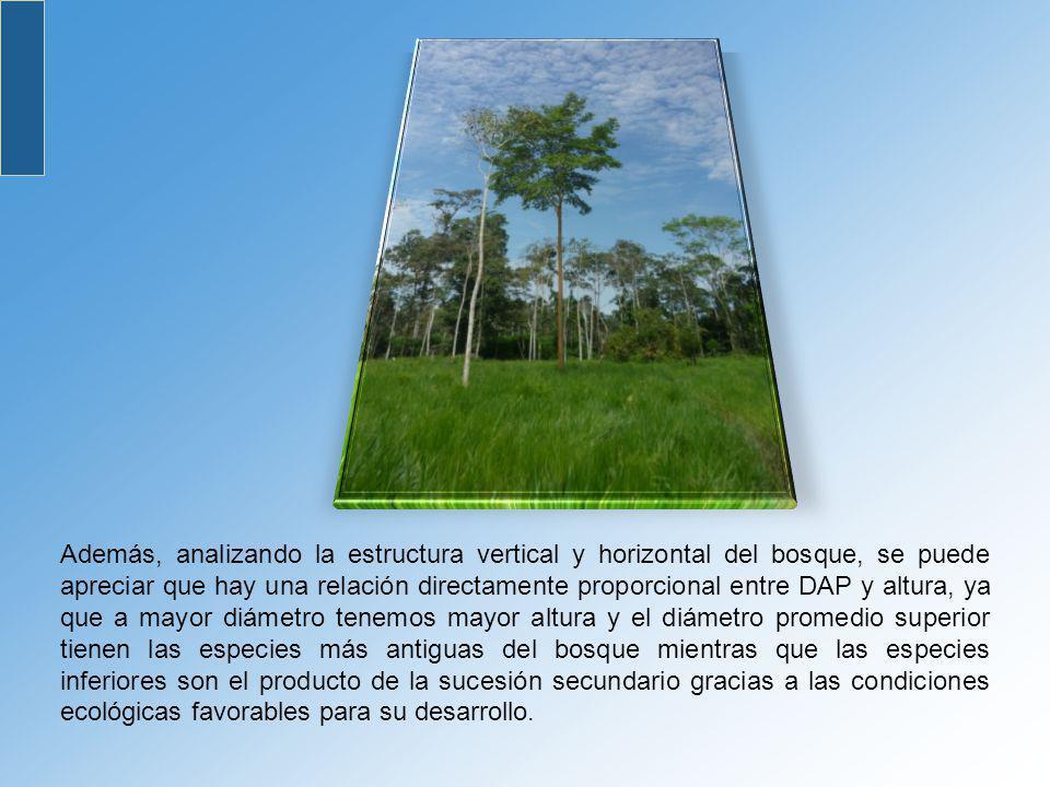 Además, analizando la estructura vertical y horizontal del bosque, se puede apreciar que hay una relación directamente proporcional entre DAP y altura