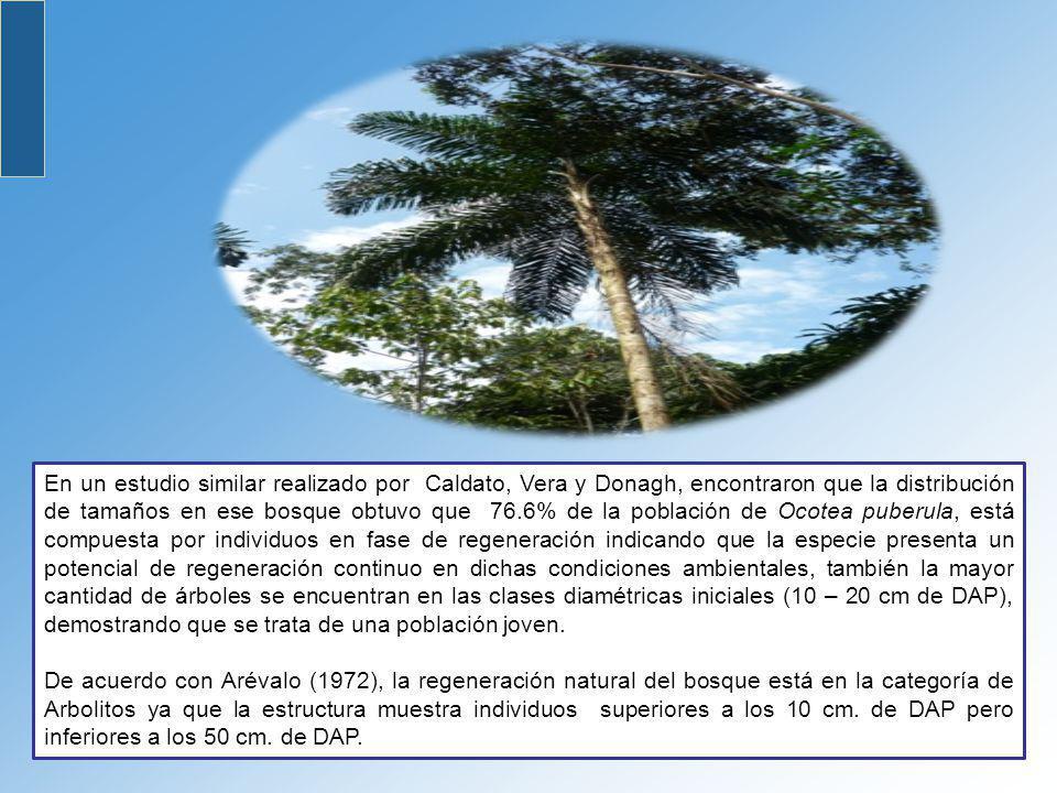 En un estudio similar realizado por Caldato, Vera y Donagh, encontraron que la distribución de tamaños en ese bosque obtuvo que 76.6% de la población