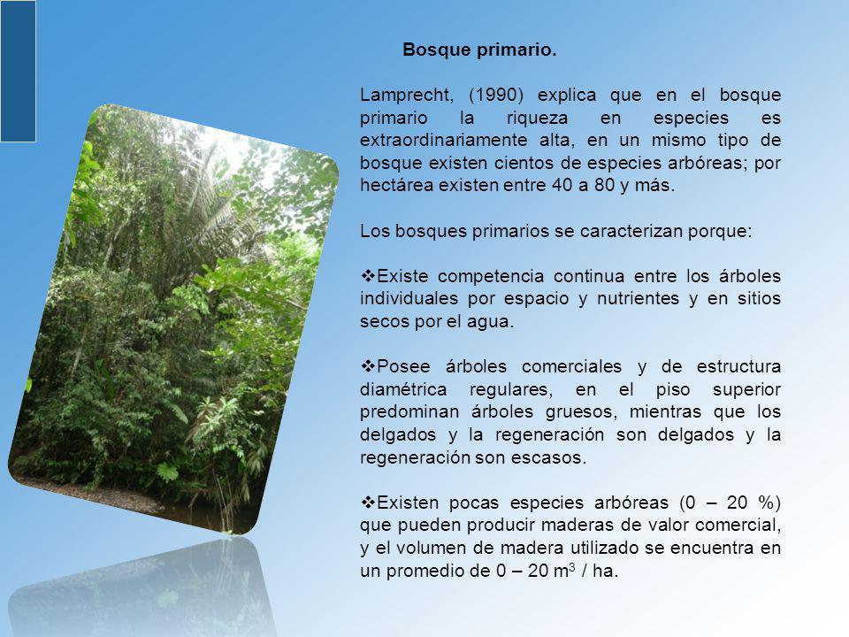 Análisis del Perfil Estructural del Bosque.