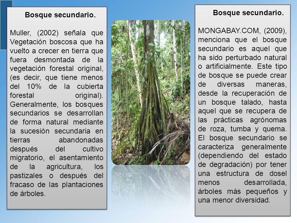 Bosque secundario. Muller, (2002) señala que Vegetación boscosa que ha vuelto a crecer en tierra que fuera desmontada de la vegetación forestal origin