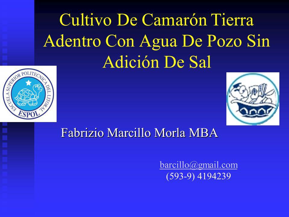 Cultivo De Camarón Tierra Adentro Con Agua De Pozo Sin Adición De Sal Fabrizio Marcillo Morla MBA barcillo@gmail.com (593-9) 4194239